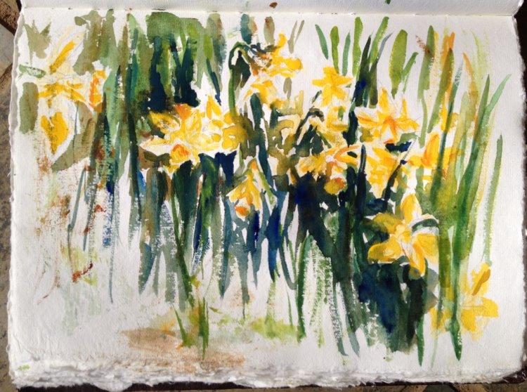 Daffodils Sketch