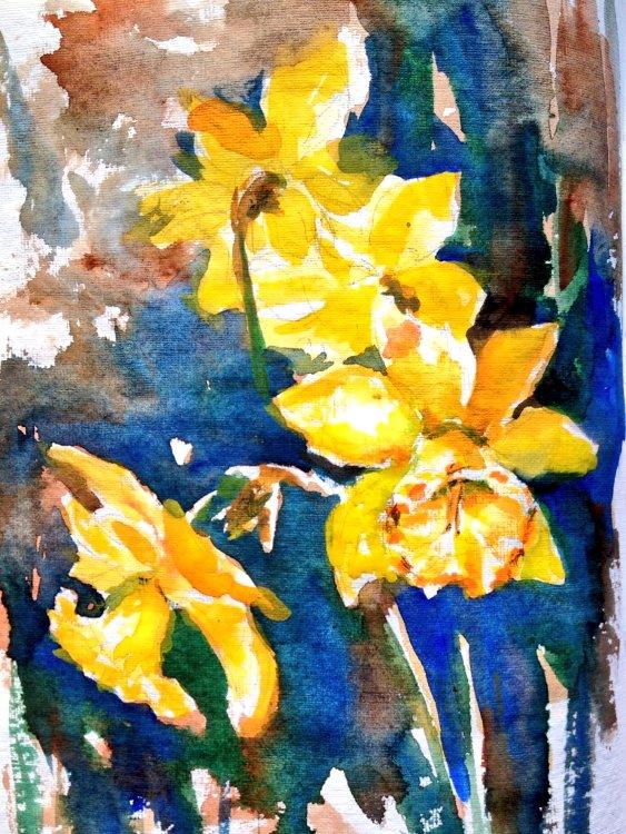 Watercolor Sketching Daffodils Again
