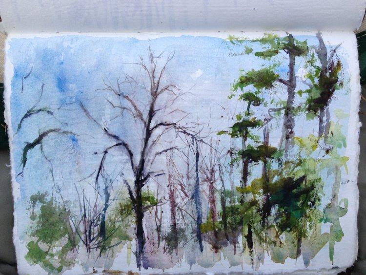 Sketching winter trees