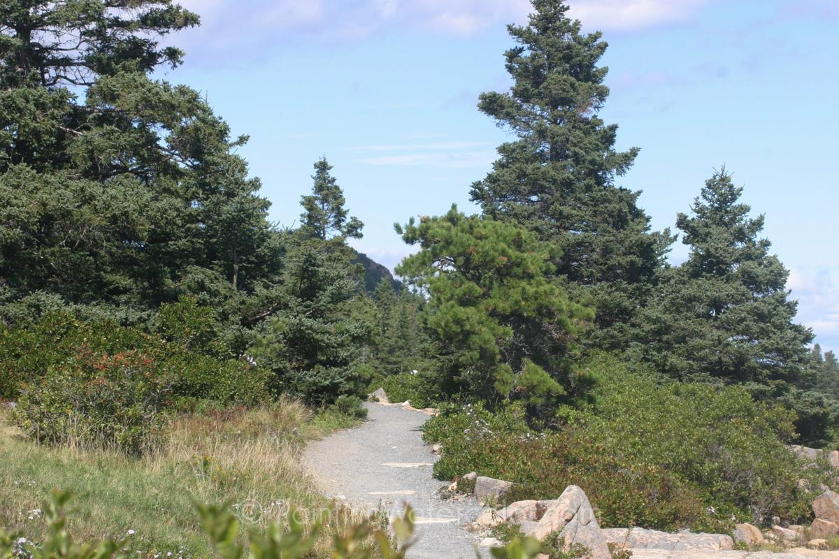 Maine Coast Path Painting Tutorial Reference Photo