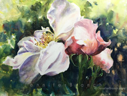 Roses watercolor painting by Jennifer Branch