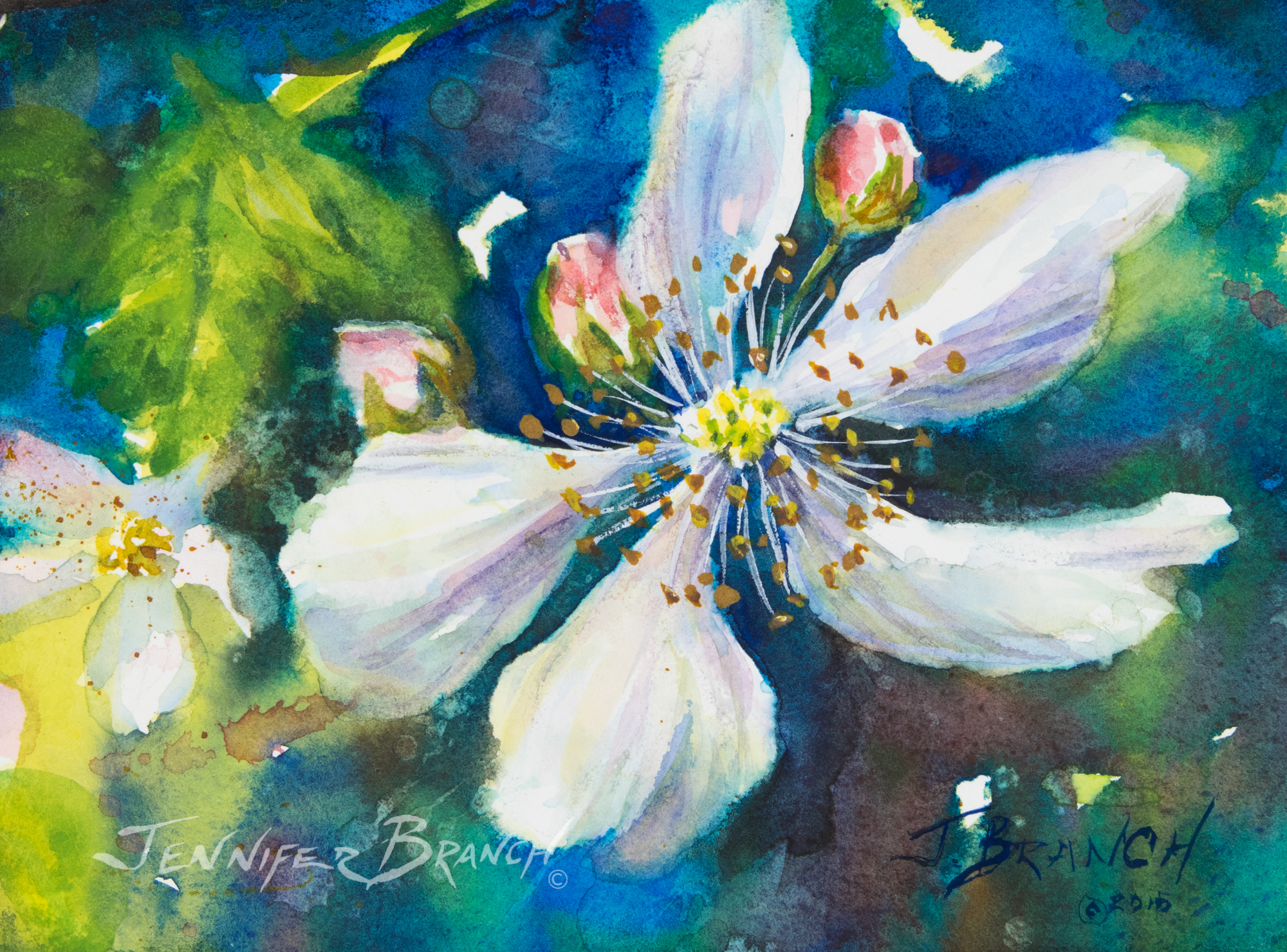 Painting blackberry flowers for Watercolor drawing tutorial
