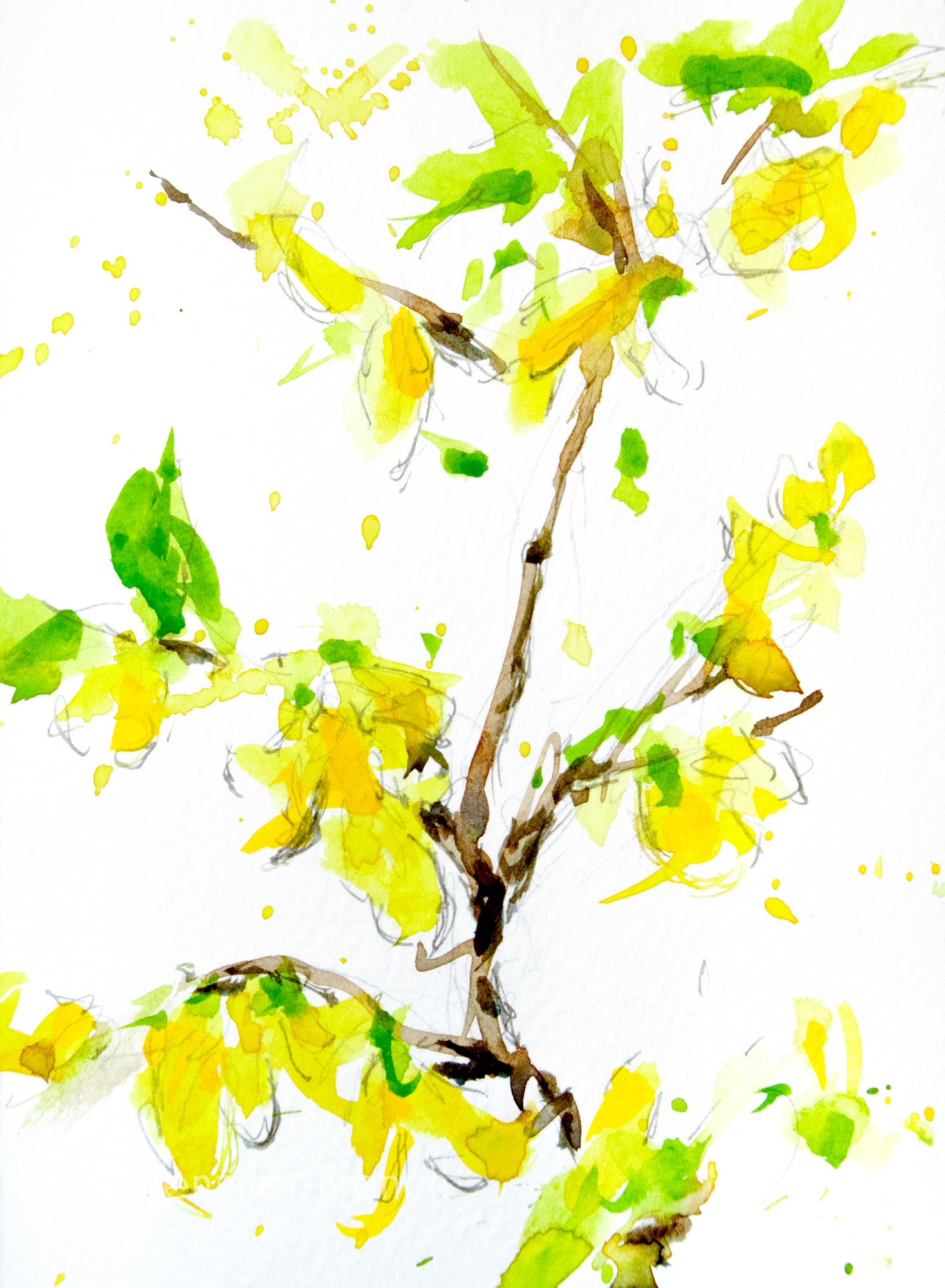 Forsythia notecard