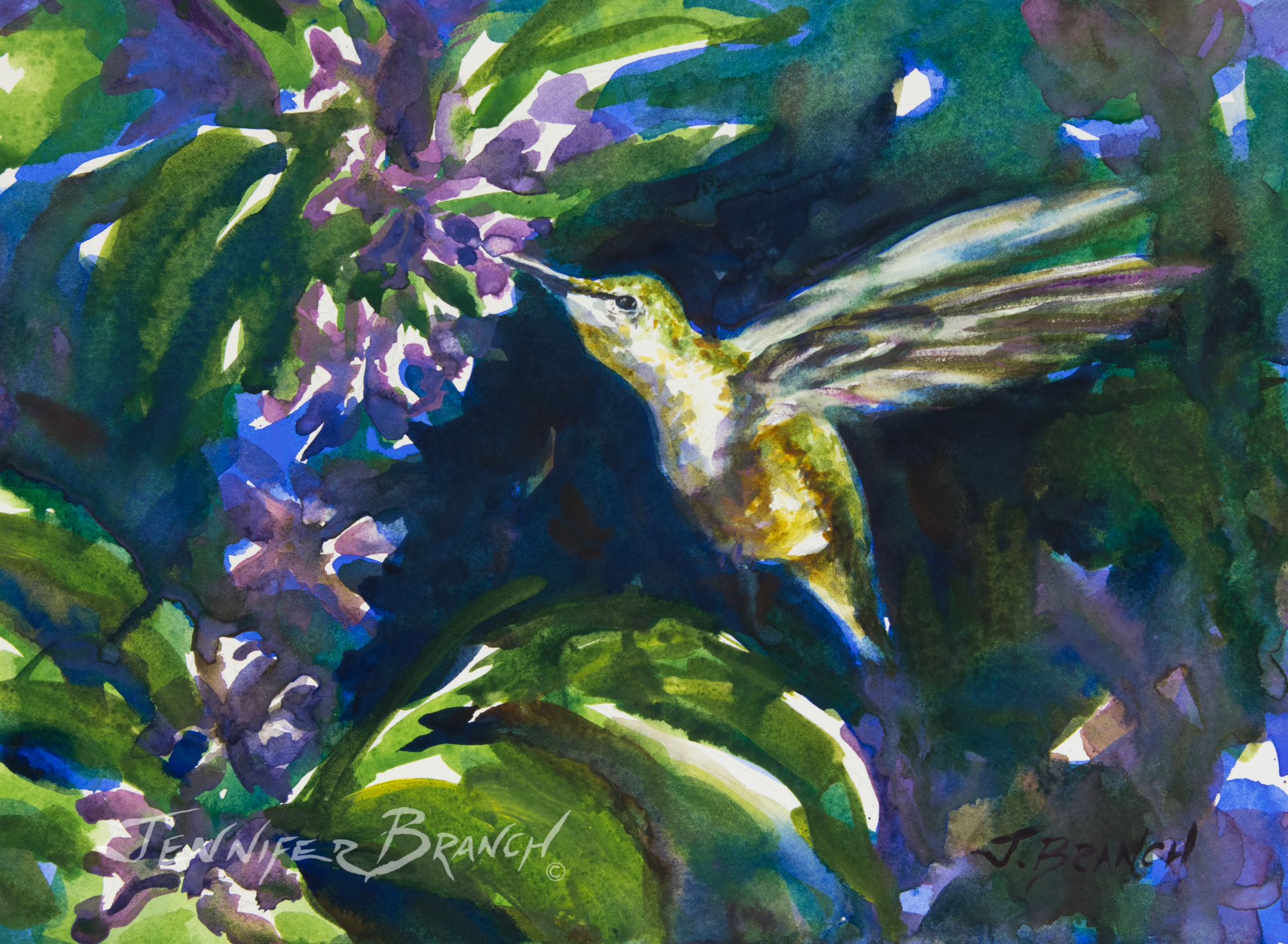 Hummingbird and a salvia flower watercolor painting