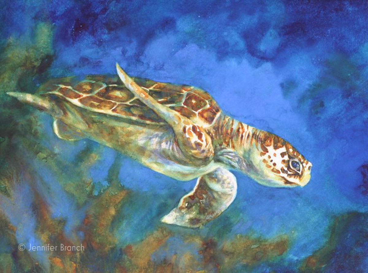 Sea turtle watercolor painting by Jennifer Branch